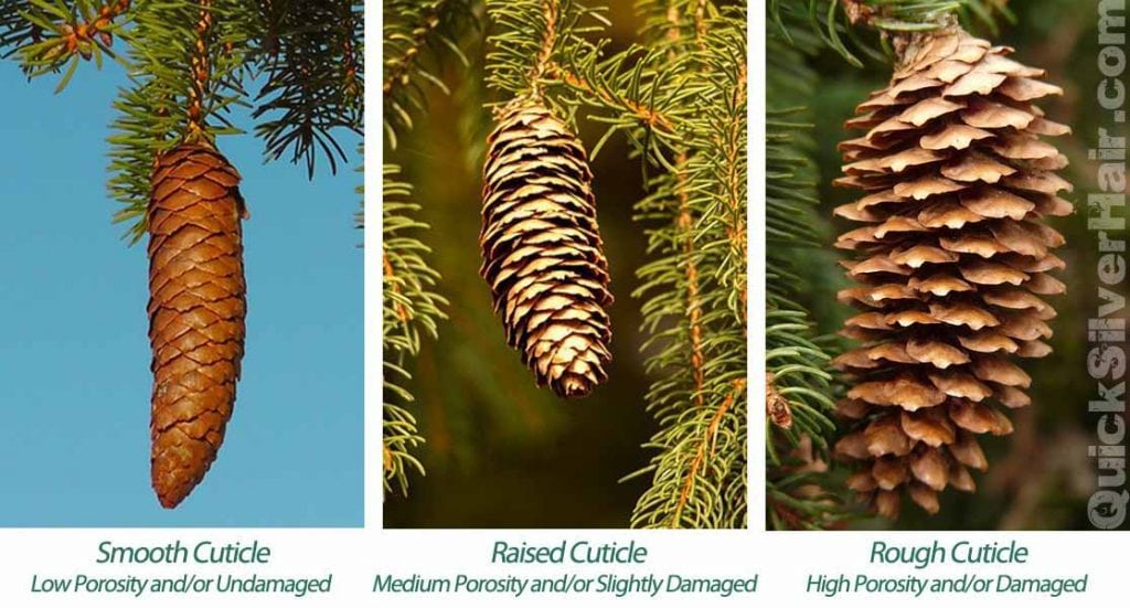 image of pinecones for quicksilverhair
